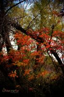 Red Tree Series 1: 1 by Biliegh