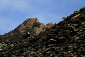 Monarch of the scree by Cantabrigian