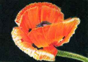 SOLD - Drawn to Help 4.5: Papaver