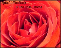 Rose Stock Pack by Spiteful-Pie-Stock
