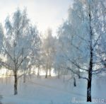 Cold Forest by Adniv