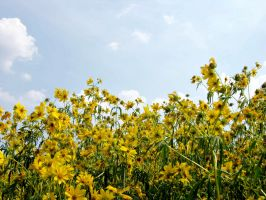 Field of Yellow Flowers 5 by FairieGoodMother