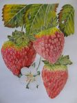 Strawberries. by ejame15