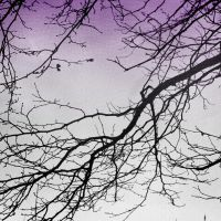 Branch by dimajaber