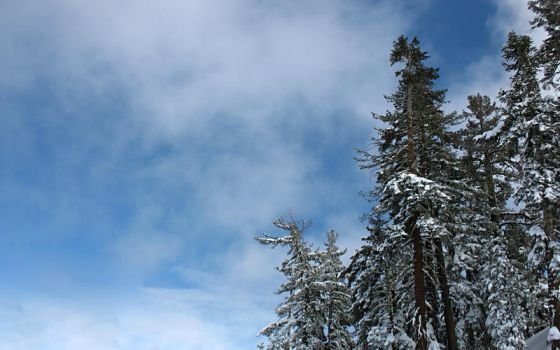 Northstar Tree Snow and Sky by Leitmotif