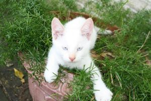 Kitten in a flowerpot by goodiebagstock