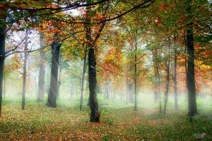 Foggy autumn by valiunic