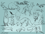 Fox and Rat concept sketches by DawnFrost