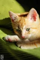 Green makes the cats zen by Moyrah