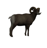 Bighorn Png Stock 2 by Direwrath