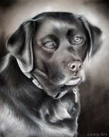 Bella - Charcoal Drawing by secrets-of-the-pen
