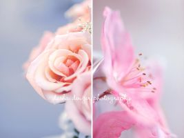 diptych by onixa