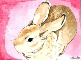 Daily Doodle #1 - RED - Mini Rex Rabbit, Scooter by MissMinda