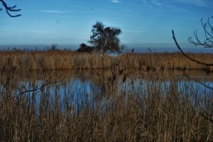 The Marshes At Sandy Point by Matthew-Beziat