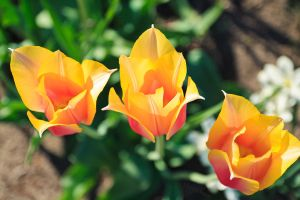 5 Days of Flowers 2014: Day 4a by Henrickson