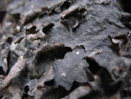 industrial fossile by digitalchrome