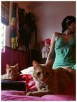 when Cats look at you but... by vioske