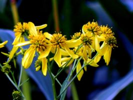 Bright Yellow by dmguthery