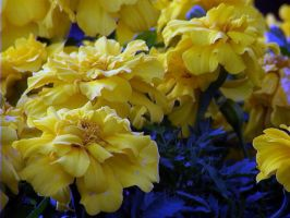 Yellow Flowers by Tech-Dave