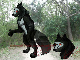Dark Werewolf Adopt CLOSED! by Infinitum--Nihil