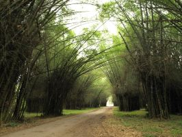 Bamboo Forest by Debellos