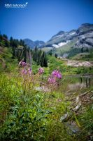 Wild Fire Weed by mjohanson