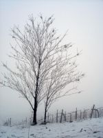 Fog and frost by martaraff