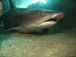 Cave Shark by X5-442
