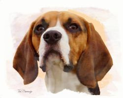 Beagle by ToriB