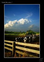 Until the Cows... by Johndead