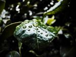 rainy day. II by MikeKnoxville