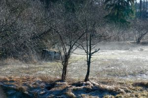 Trees and Fog by Violet-Kleinert