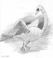 Swan Pencil Drawing by hilsonlover