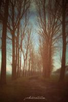 Road To Nowhere by j-vdb