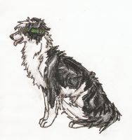 Border Collie by Rikkanna
