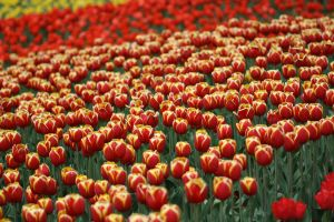 A Sea of Colour by szekley