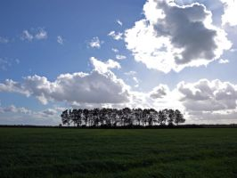 Row of Trees by Anne-Cathy