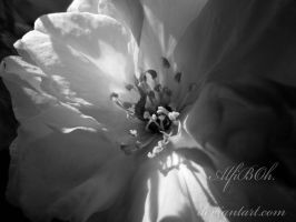 Blossom..black and white.. by AlfiBOh