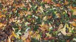 autumnleaves by Mavca