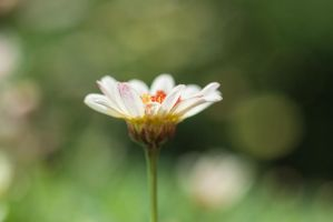 .: Small Beauty :. by meenabug
