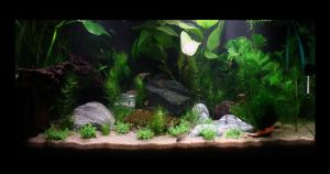Fish Tank Rebuilt by Hector42