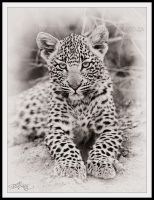 Leopard Cub by mitchellkrog