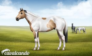 American Paint Horse by Chistokrovka