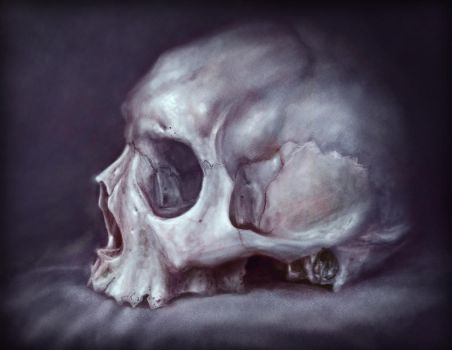 Skull Study by RodgerPister