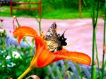 Butterfly Moment by SerenelyEther
