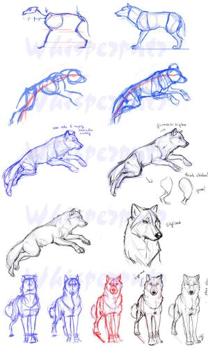 http://th02.deviantart.net/fs47/300W/i/2009/197/a/6/Wolf_Construction_by_whisperpntr.jpg