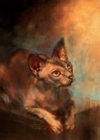 Handsome Sphynx by alicexz