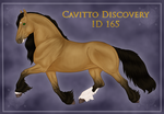 Cavitto Discovery 165 by ThatDenver