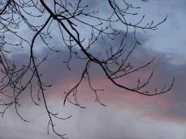 Bare Tree Dawning Sky Clouds 4 by FantasyStock