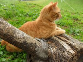 Cat Lying on Log Stock by 4Equines